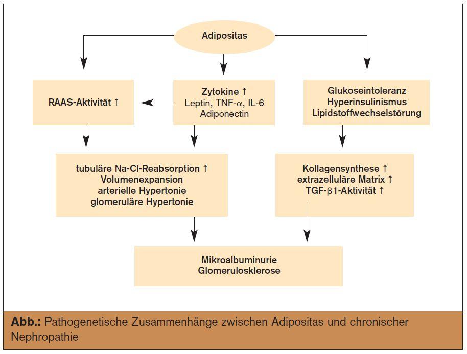 chronische niereninsuffizienz stadien pdf