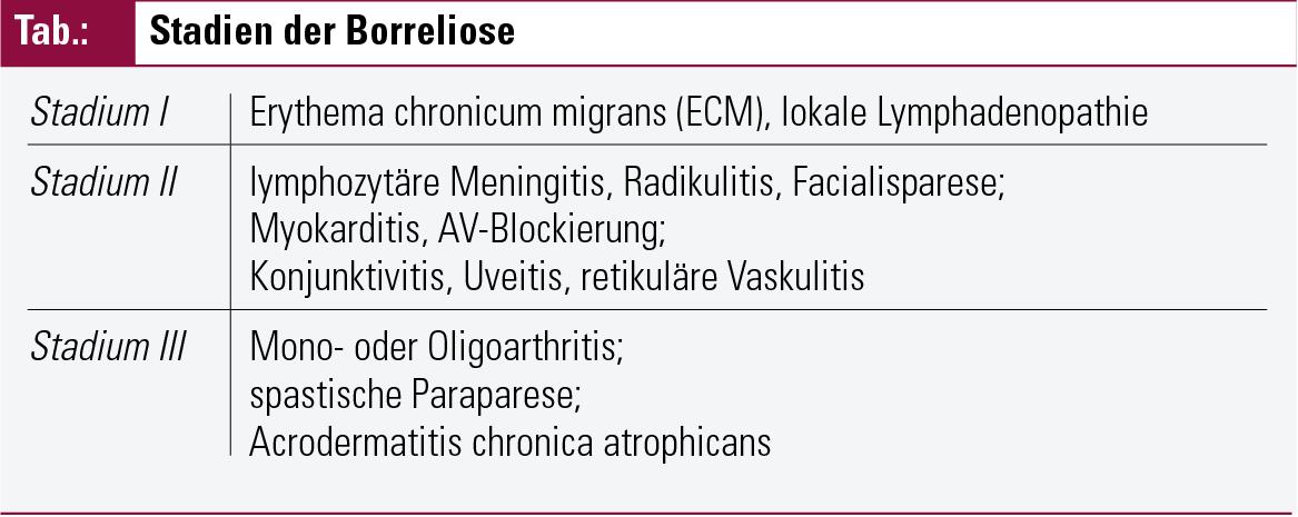 Erythema Migrans Related Keywords & Suggestions - Erythema