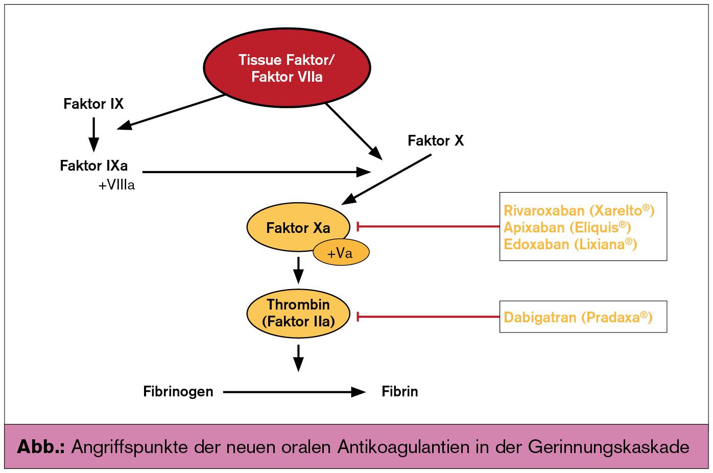 wirkungsmechanismus steroidhormone