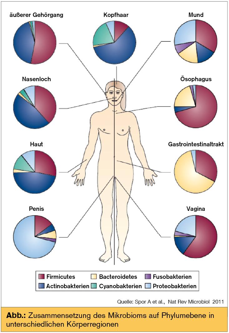 Das intestinale Mikrobiom – Limitationen und Zukunft | Universum ...