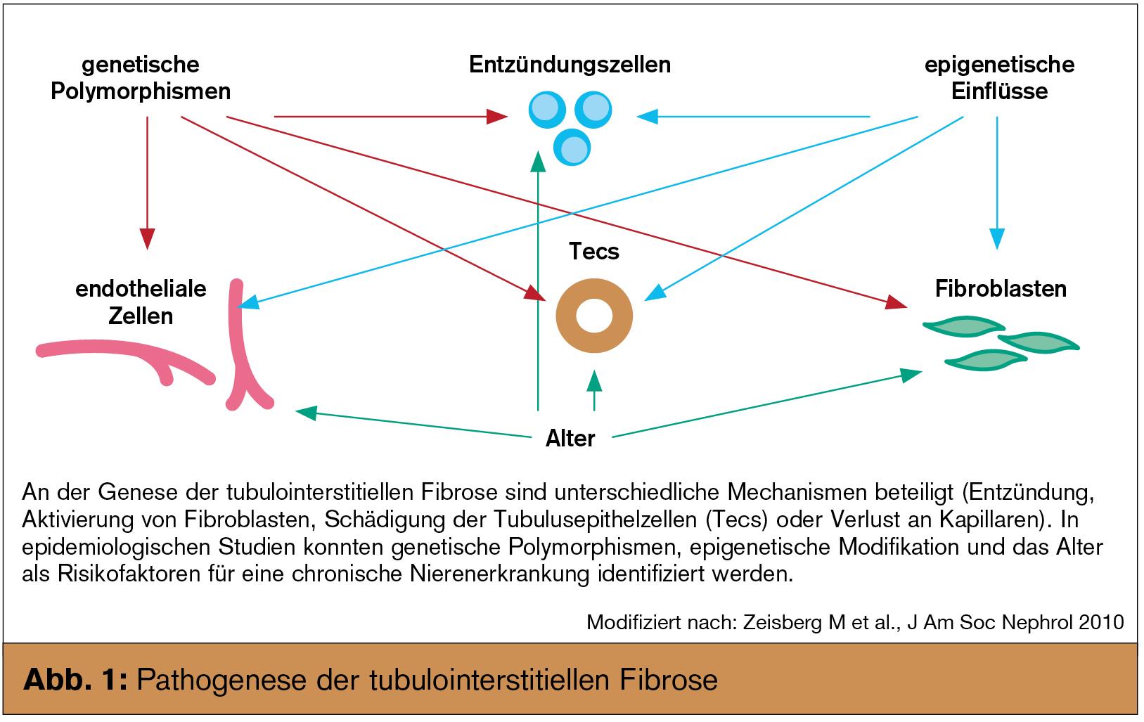 Fibrosehemmung bei chronischer Niereninsuffizienz   Universum Innere ...