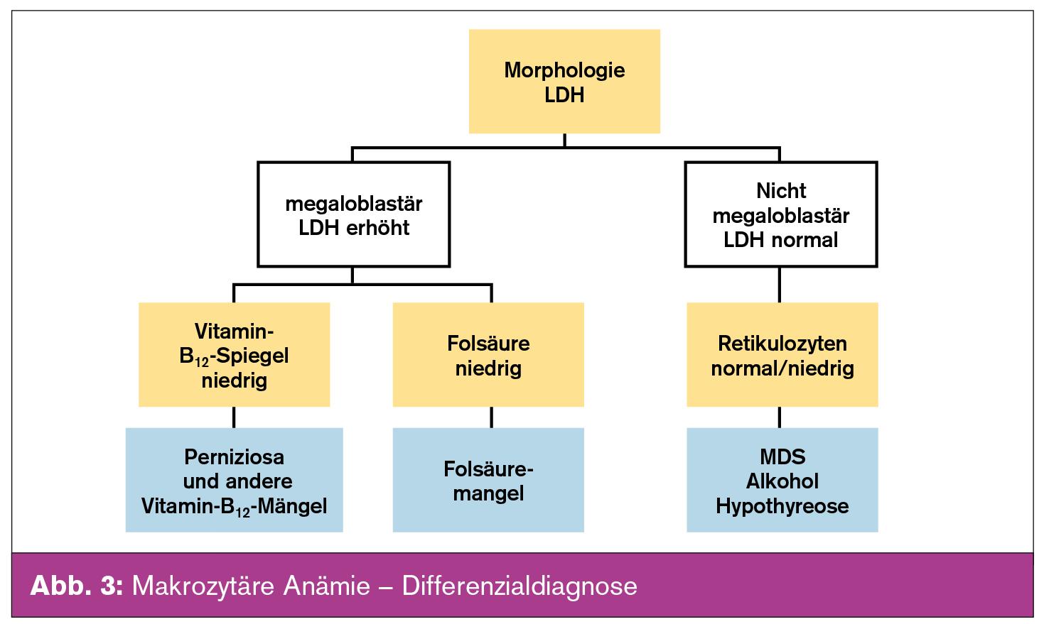 Differenzialdiagnose der Anämie und ihre Abklärung | Universum ...